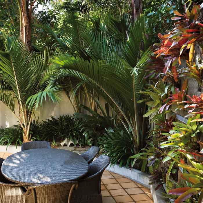 Nikau palms and a colourful bromeliad wall enclose this courtyard.